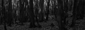 John Yorke Into the woods MAIN PAGE black and white woods photograph